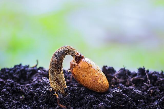 germinado de planta en cultivo exterior