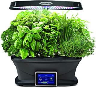 Mini cultivos de plantas medicinales en casa